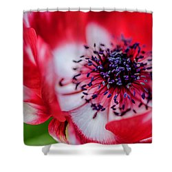 Shower Curtain featuring the photograph Harmony Scarlet Poppy Anemone by Julie Palencia