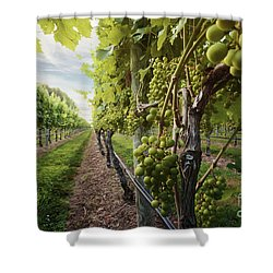 Harmony Vineyard Stony Brook New York Shower Curtain
