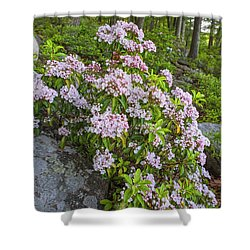 Harriman Pink And White Mountain Laurel Shower Curtain