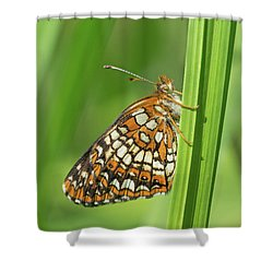 Harris' Checkerspot Shower Curtain