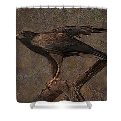 Harris's Hawk Shower Curtain