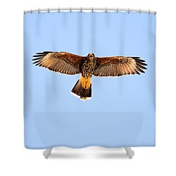 Shower Curtain featuring the photograph Harris's Hawk H36 by Mark Myhaver