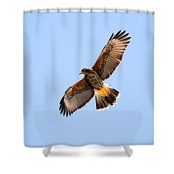 Shower Curtain featuring the photograph Harris's Hawk H37 by Mark Myhaver