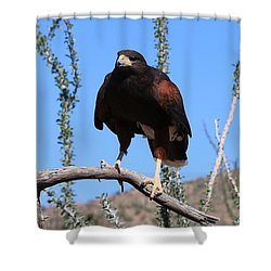 Shower Curtain featuring the photograph Harris's Hawk Perched - 3 by Christy Pooschke