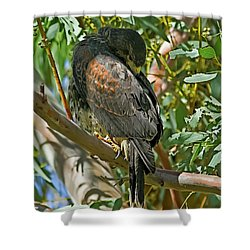 Shower Curtain featuring the photograph Harris's Preening V09 by Mark Myhaver
