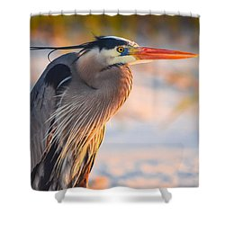 Harry The Heron With Plumage Close-up Shower Curtain