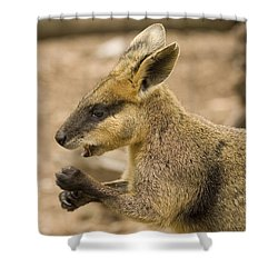 Having A Snack Shower Curtain by Mike  Dawson
