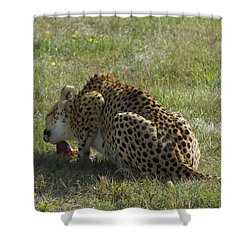 Having Lunch Shower Curtain