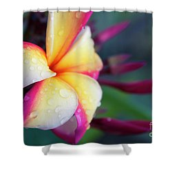 Shower Curtain featuring the photograph Hawaii Plumeria Flower Jewels by Sharon Mau