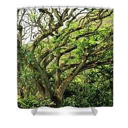 Hawaii Tree-bard Shower Curtain by Denise Moore