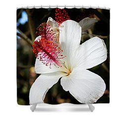 Shower Curtain featuring the photograph Hawaiian Hibiscus  by Joann Copeland-Paul