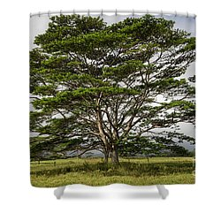 Hawaiian Moluccan Albizia Tree Shower Curtain