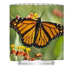 Hawaiian Monarch 3 Shower Curtain by Michael Peychich