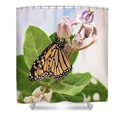 Hawaiian Monarch Shower Curtain by Heather Applegate