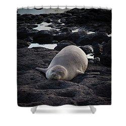 Hawaiian Monk Seal Shower Curtain