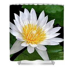Hawaiian White Water Lily Shower Curtain