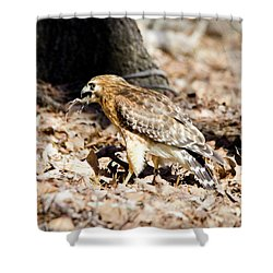 Shower Curtain featuring the photograph Hawk And Gecko by George Randy Bass