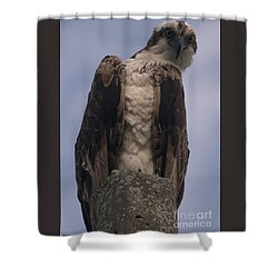 Hawk Attitude Shower Curtain