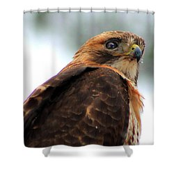 Hawk Shower Curtain by Bruce Patrick Smith