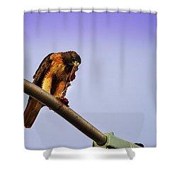 Hawk Eating Shower Curtain