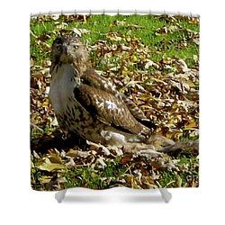 Hawk Falling Leaves Shower Curtain