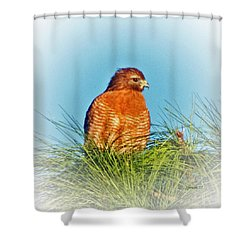 Hawk High Shower Curtain