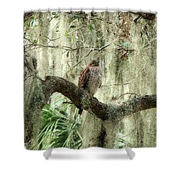 Hawk In Live Oak Hammock Shower Curtain