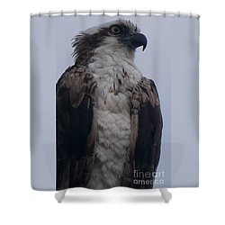 Hawk Looking Into The Distance Shower Curtain