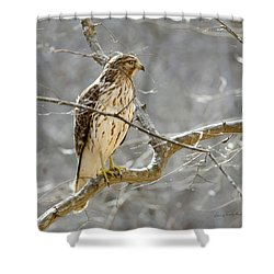 Shower Curtain featuring the photograph Hawk On Lookout by George Randy Bass