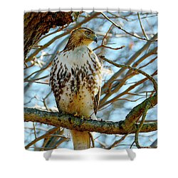 Hawk Shower Curtain
