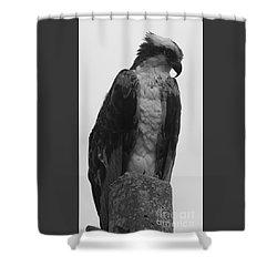 Hawk Perched Shower Curtain