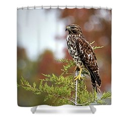 Red Shoulder Hawk Profile Shower Curtain