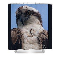 Hawk Profile Shower Curtain