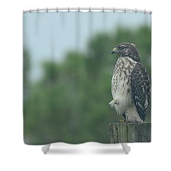 Hawk Resting A Leg Shower Curtain