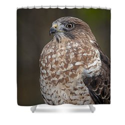 Hawk Shower Curtain