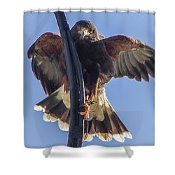 Hawk Watch 6 Shower Curtain