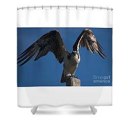 Hawk Wings Shower Curtain