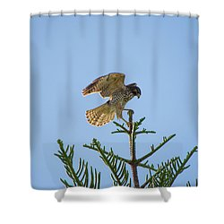 Hawk With Regal Landing Shower Curtain