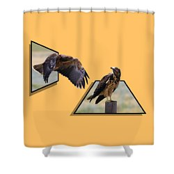 Hawks Shower Curtain by Shane Bechler