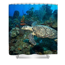 Hawksbill Haunt Shower Curtain