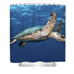 Hawksbill Sea Turtle In Mid-water Shower Curtain by Karen Doody