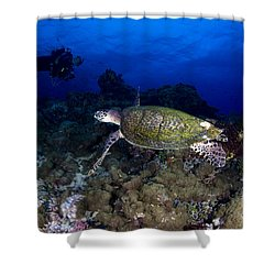 Hawksbill Turtle Swimming With Diver Shower Curtain by Steve Jones