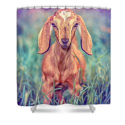 Shower Curtain featuring the photograph Hazel by TC Morgan