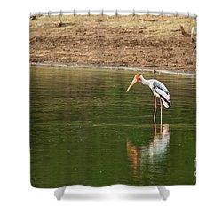 The Painted Stork  Mycteria Leucocephala  Shower Curtain