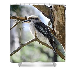 Shower Curtain featuring the photograph He Sings The Song Of The Bush by Linda Lees