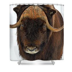 Shower Curtain featuring the photograph Head Butt by Tony Beck