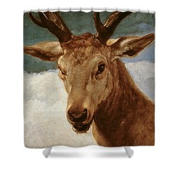 Head Of A Stag Shower Curtain by Diego Rodriguez de Silva y Velazquez
