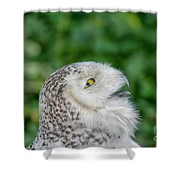 Head Of Snowy Owl Shower Curtain