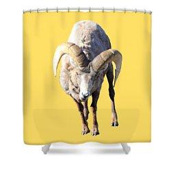 Head-on Shower Curtain