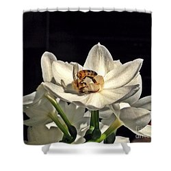 Head Over Heels For Narcissus Shower Curtain